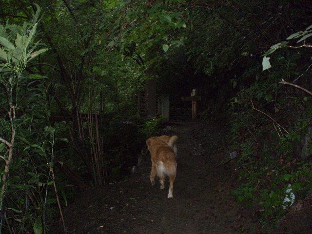 犬日記 178