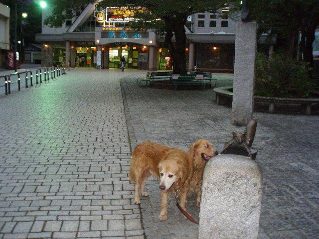 犬日記 203