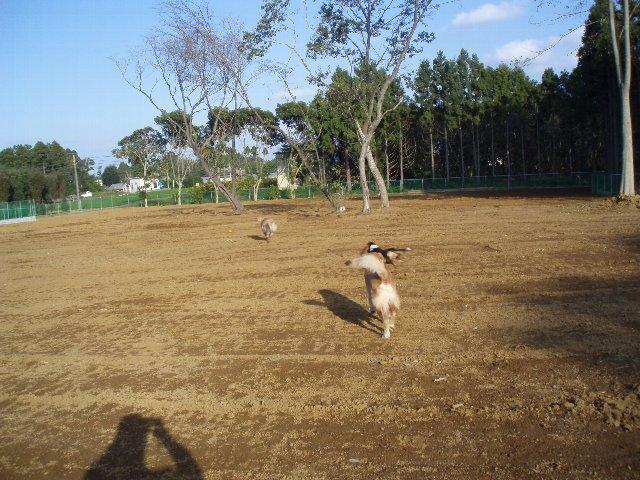 犬日記 018