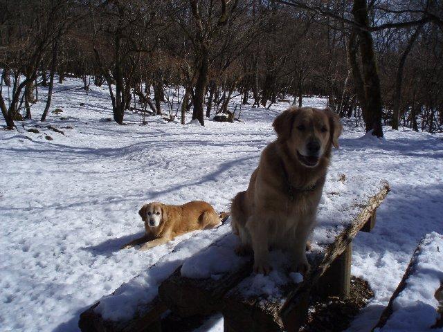 犬日記 098