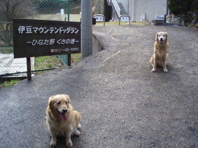 犬日記 222