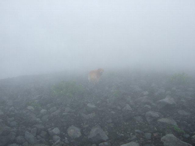 犬日記 214