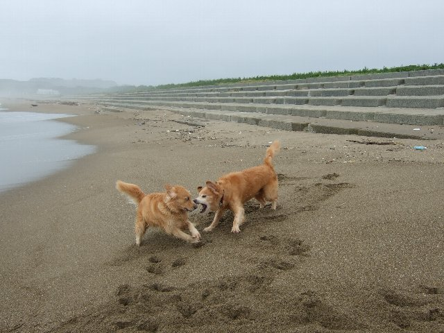 犬日記 2