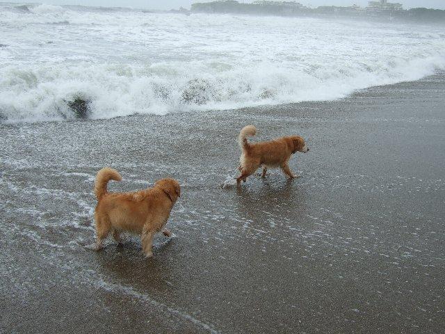 犬日記 3