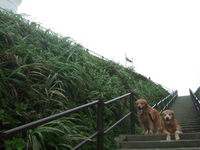 犬日記 13