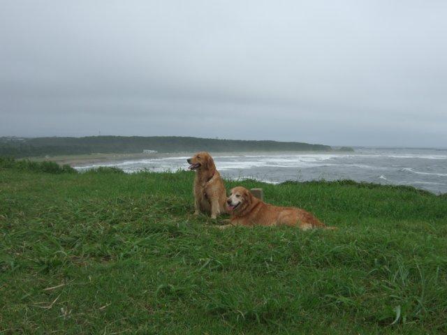 犬日記 14