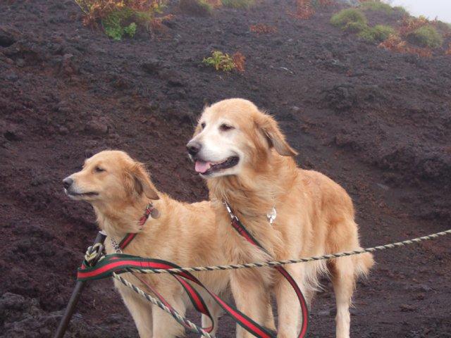 犬日記 002