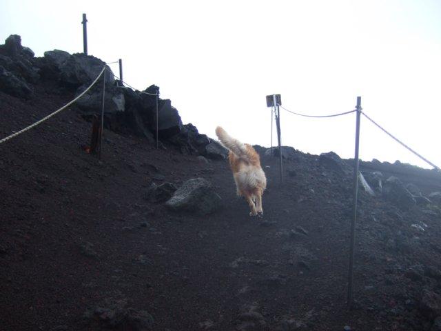 犬日記 012