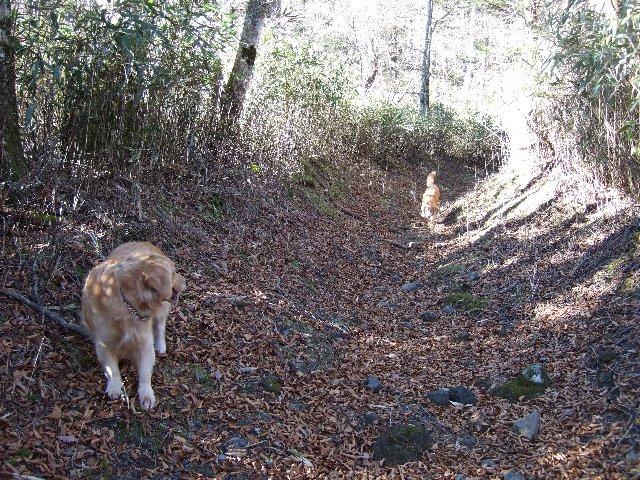 犬日記 361