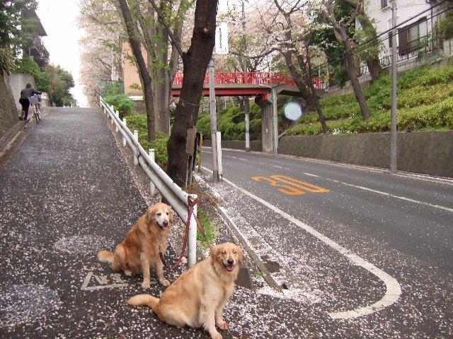 富士山 082