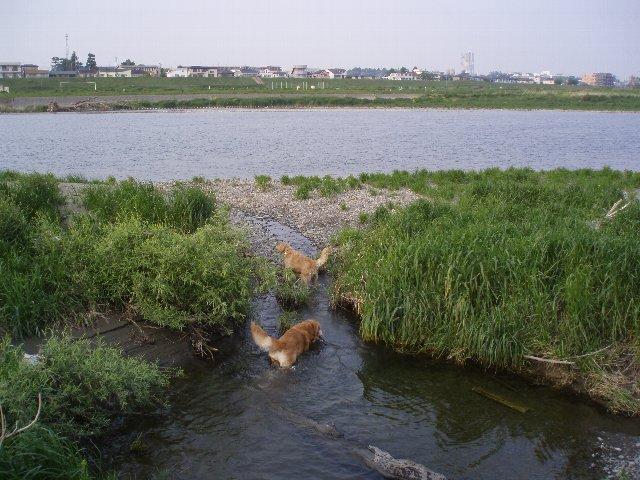 多摩川 005