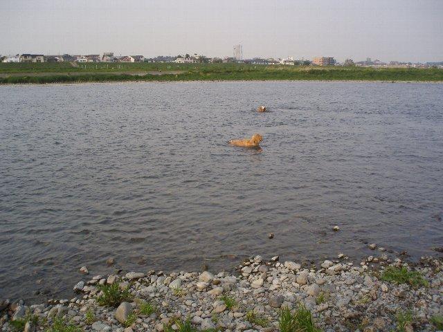 多摩川 008