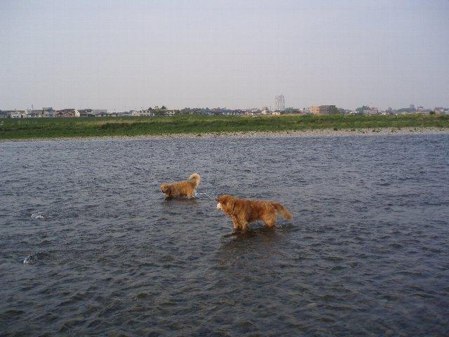 多摩川 011
