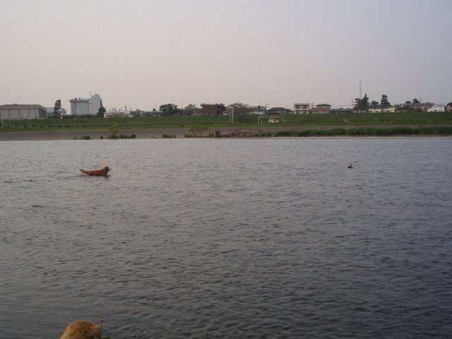 多摩川 019