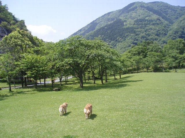 丹沢湖 004