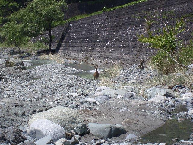 丹沢湖 061