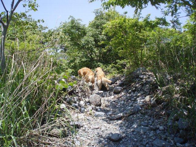丹沢湖 070
