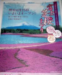 富士山の芝桜