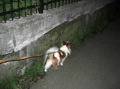 クリちゃんのお散歩