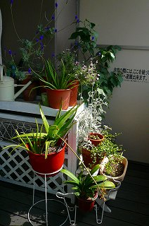 むっぽこ。ガーデン