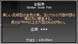 おっきい金輪魚が釣れた