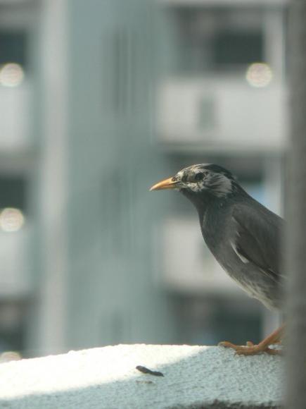 2008年 鳥