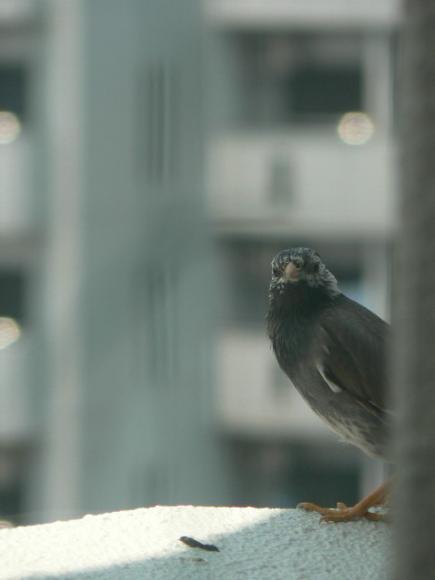 2008年春 鳥