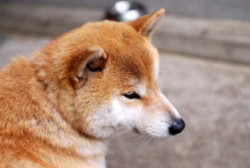 箱根の太郎