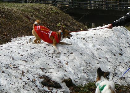 やっぱり雪好き