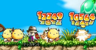 Maple6405a.jpg