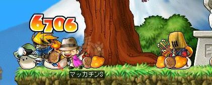 Maple6409a.jpg