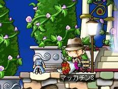 Maple6451a.jpg