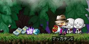 Maple6477a.jpg