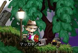 Maple6486a.jpg