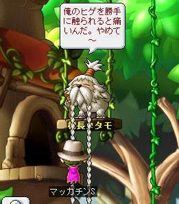 Maple6527a.jpg