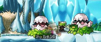 Maple6613a.jpg