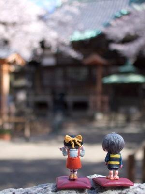 桜とキタネコ