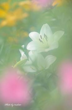 FD3_9166m.jpg