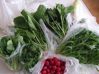 オカンの野菜