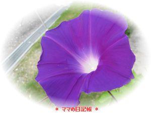001_20080730103500.jpg