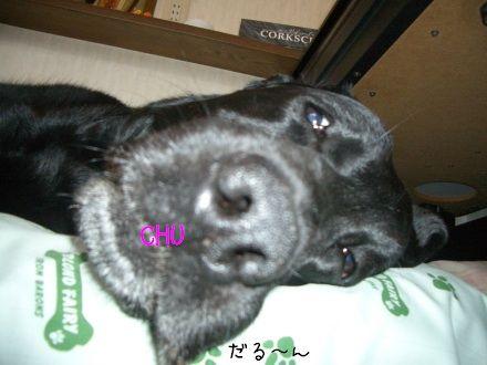 CIMG4648_1.jpg
