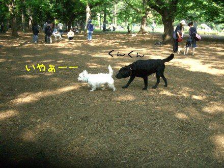 CIMG4670_2.jpg