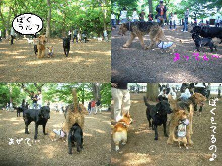 CIMG4685_3.jpg