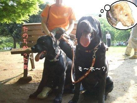 CIMG4697_7.jpg
