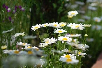 初春から楽しませてくれた「春花壇」