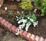 2008.4.27現在の花壇