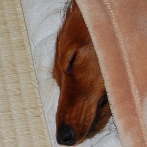 寝顔を見せて~♪