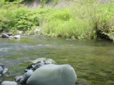 20080705D.jpg