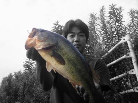 2次会のドラマ魚。