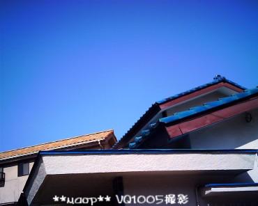 IMG_0113.jpg